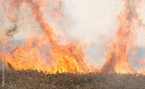 Fotografie, Obraz Feuer, brennendes Weizenfeld