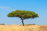 Fototapeta Sawanna - Landscape with nobody tree in Africa