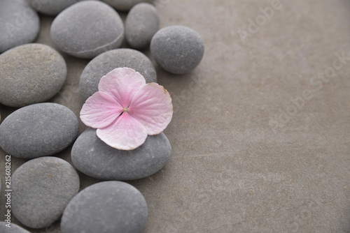Photo sur Plexiglas Zen pierres a sable Pink hydrangea petals with pile of gray stones on gray background