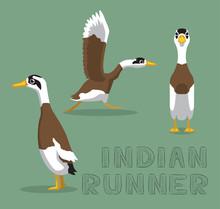 Duck Indian Runner Cartoon Vec...