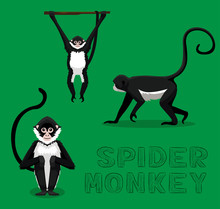 Spider Monkey Cartoon Vector Illustration