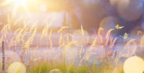 Tuinposter Zalm Art abstract September sunny autumn meadow background
