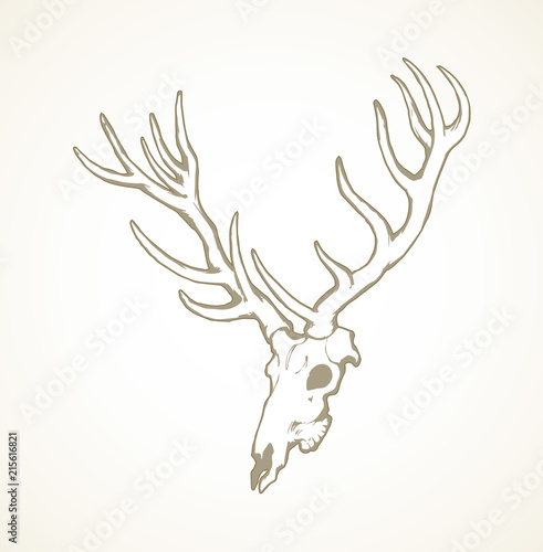 Valokuvatapetti Skull of deer. Vector drawing