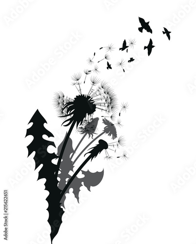 Photo sur Toile Empreintes Graphiques Silhouette of a dandelion with flying seeds. Black contour of a dandelion. Black and white illustration of a flower. Summer plant.