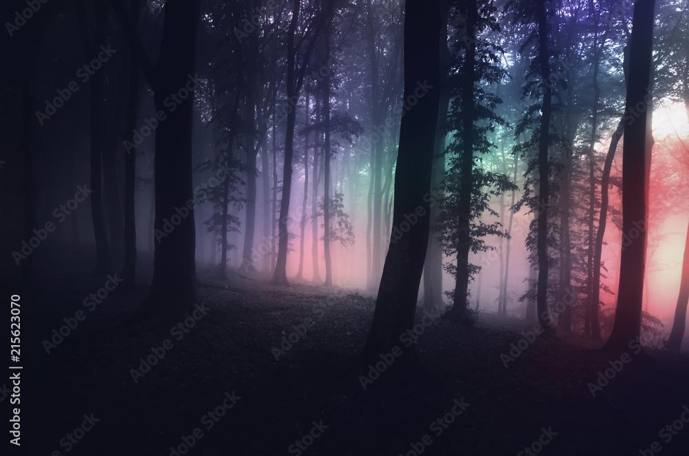 Fototapeta surreal forest with strange light at night