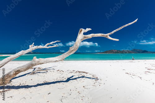 Photo White driftwood tree on Whitehaven Beach with white sand in the Whitsunday Islan