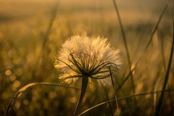 Лучи восходящего солнца на полевых растениях.