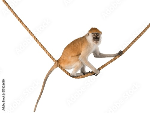 Foto op Aluminium Aap Monkey Sitting On Rope - Isolated