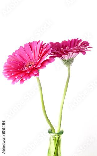 Keuken foto achterwand Gerbera pink gerbera flower