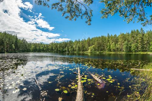 Fotobehang Meer / Vijver Fallen tree trunk in a beautiful lake in Sweden