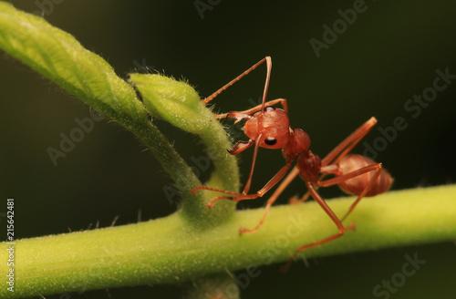 Plakat Mrówki sygnalizują strach wrogowi, jeśli są blisko, mogą zranić.