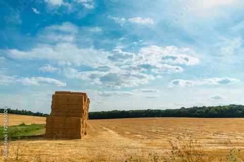 Fotografia, Obraz  Paysage sur un champ de blé  avec des ballots de paille empilés sur un ciel bleu