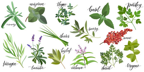 FototapetaSet of popular culinary herbs with hand written names. Rosemary, majoram, thyme, basil, parsley, chives, savory, sumac, tarragon lavender bay leaf verbena chervil oregano