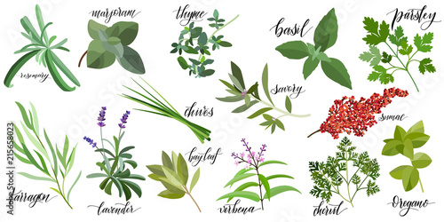 Photo  Set of popular culinary herbs with hand written names