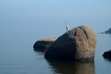 White Heron Standing On A Rock