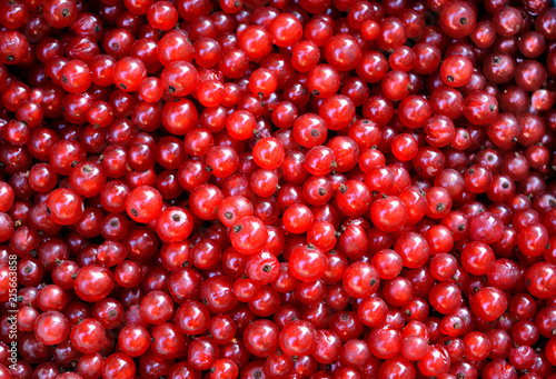 fototapeta na lodówkę organic red currant, summer background, texture of juicy ripe vitamin berries