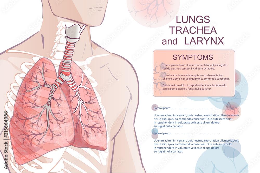 Fototapeta vector human Respiratory System