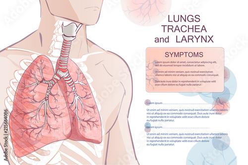 Obraz vector human Respiratory System - fototapety do salonu
