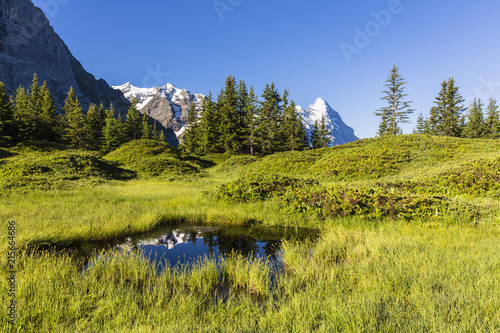 Pond surrounded by Meadow and Mountain Fir Trees, Mount Eiger in the distance, Bernese Alps, Grosse Scheidegg, Switzerland
