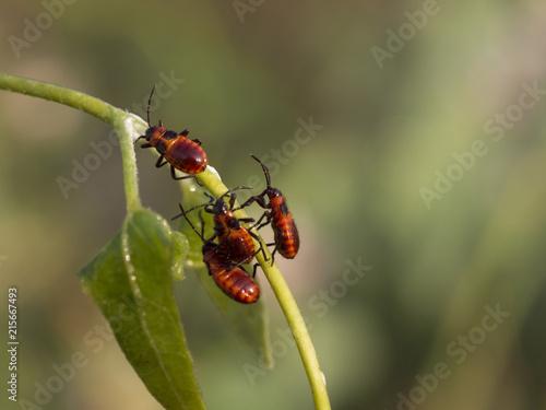 Plakat słodkie czerwone robaki na makro rośliny