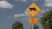 Panther Wild Cat Crossing Sign...