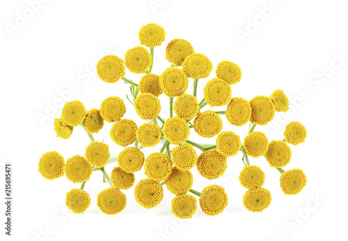 Poster Macarons Medicinal plant tansy isolated on a white background. Tanacetum vulgare.