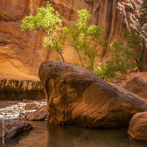 Fototapeta drzewa   trzy-male-drzewka-na-skale