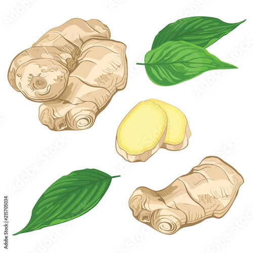 Fotografia Set vector illustration of a fresh ginger root and leaves isolated on white background