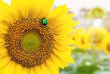 Close-up Bright Green Rose Cha...