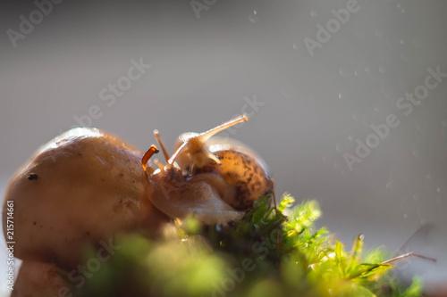 Plakat ślimak i grzyb