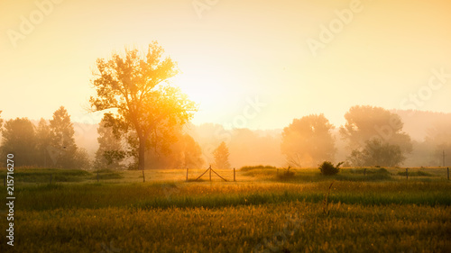 Poster Bomen Sunrise in the countryside