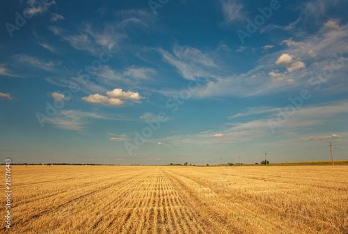 Foto op Aluminium Platteland Background landscape farm field harvested wheat on blue sky