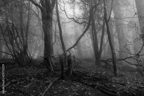 Fotografía Gloomy woods in Sibley regional Park Berkeley California