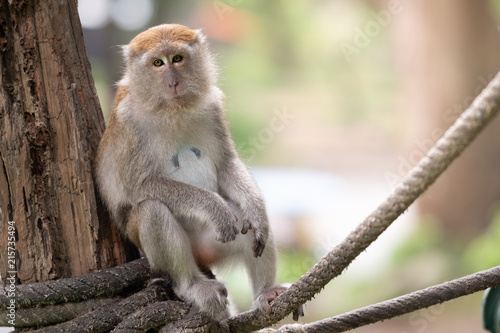 Foto op Plexiglas Aap A cute monkey lives in a natural forest of Thailand