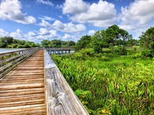Wooden Path In Swamp Of Florida