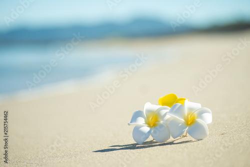 Staande foto Frangipani 砂浜とプルメリア