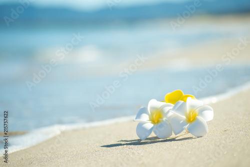 Fotobehang Frangipani 砂浜とプルメリア