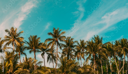 Foto op Plexiglas Palm boom coconut palm tree on the beach of thailand, coconut tree with blur sky on the beach for summer concept background.