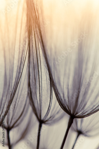 Türaufkleber Makrofotografie Dandelion abstract background. Shallow depth of field. Spring background
