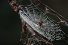 Spiderweb With Dew On A Cold Morning.