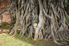Buddha Head Entwined With Tree Roots,Wat Mahathat,Ayutthaya Province,Thailand