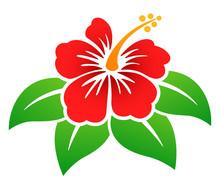 Vector Hibiscus Flower Colorful Design