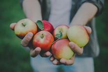 Man Showing Harvest Fresh Apples From Garden