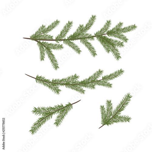 Christmas Branch Vector.Vector Christmas Tree Branches Vector Set Of Christmas Tree