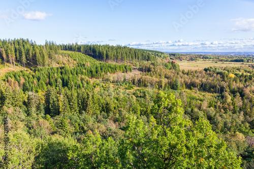 Foto op Plexiglas Pistache Forest landscape