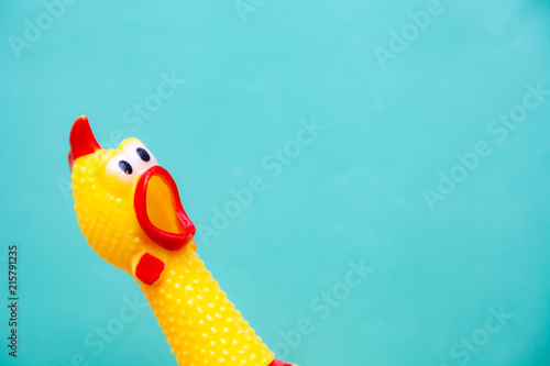 Fotografie, Obraz squawking chicken or squeaky toy are shouting and copy space pastel background
