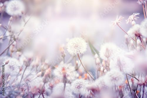 Szare   biale-kwiaty-polne