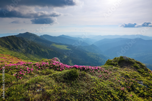 Foto op Aluminium Blauwe jeans Landscape with beautiful rhododendron in the green grass. The rays of the sun poke throuh the clouds. High mountains in haze on the horizon. Location the Carpathian Mountains, Marmarosy, Ukraine.