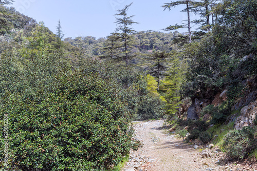 Fotobehang Bomen Vanishing footpath among sunny growth. Cedar Valley, Cyprus.