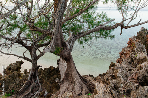 Staande foto Oceanië Dawn over a rocky inlet